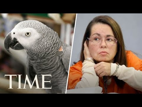 Download Youtube: Woman Is Convicted Of Murder After Parrot Who Witnessed Killing Repeats 'Don't Shoot' | TIME