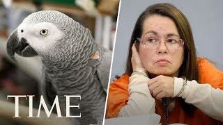 Woman Is Convicted Of Murder After Parrot Who Witnessed Killing Repeats 'Don't Shoot'   TIME