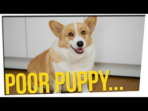 South Korean Man Cooked His Neighbors Dog?! ft. Boze & DavidSoComedy