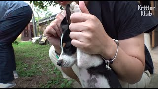 Troublemaker Dogs Decided To Do 'this' Not To Get Scolded Again  Part 1  | Kritter Klub