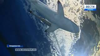Кормить акул с руки и обниматься со скатами в танце можно в Приморском океанариуме