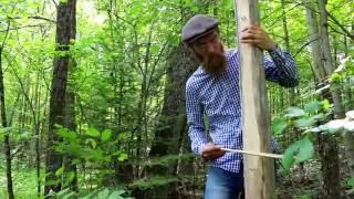Bowed Tree Harp