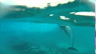 Dolphin Play Thumbnail