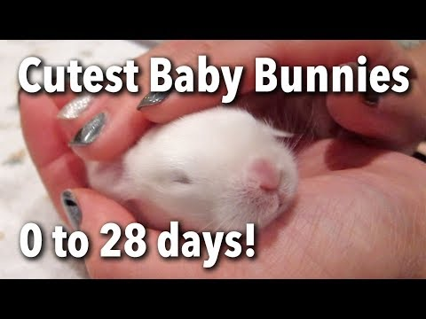 The Cutest Baby Bunnies - Newborn to 28 Days!