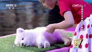 Девочка усыпила животных и розбудила