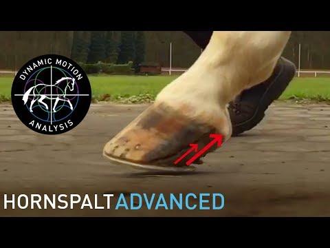 Bewegungsanalyse Erkrankter Huf Beim Pferd  / Fallbeispiel 1 Advanced  /DYNAMIC MOTION ANALYSIS