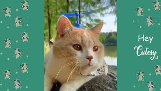 Tiktok Cat 🐱 Cutest And Funniest Cat 🐱 Funny Compilation 2019  Hey Cutesy 4
