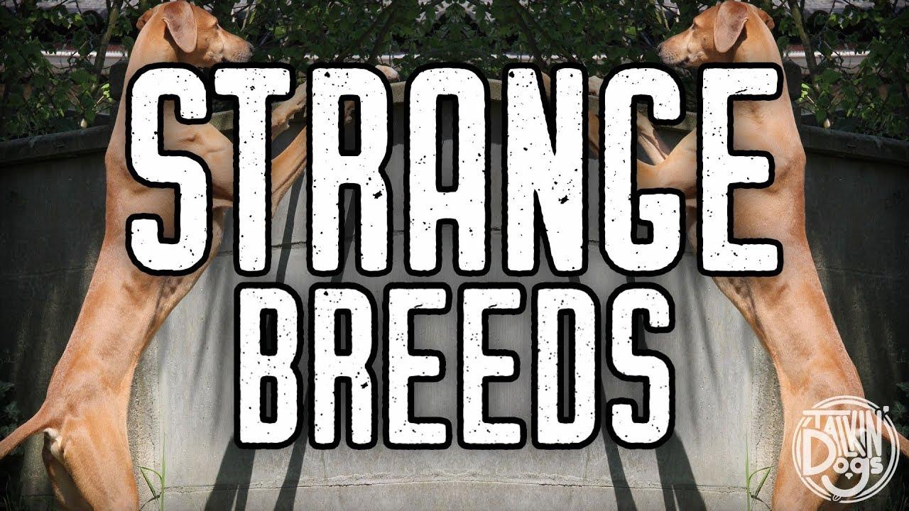 10 Rare Dog Breeds Talkin Dogs List Show Youtube