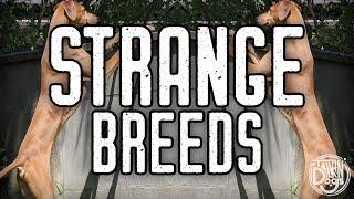 10 Rare Dog Breeds | Talkin' Dogs List Show