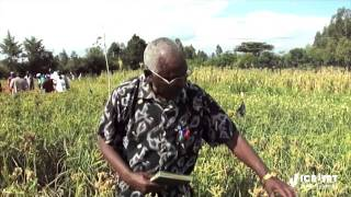 Finger millet farmer showcases different improved varieties