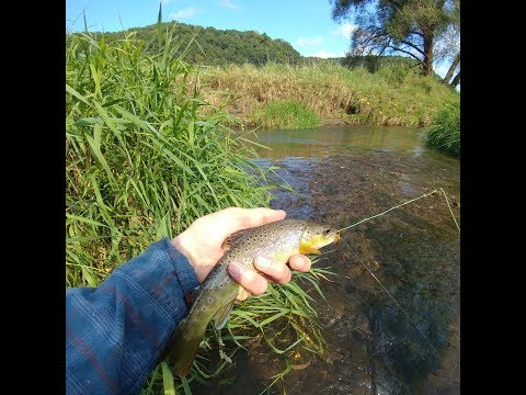 Wisconsin Driftless Area Trout Fishing, Fly Fishing For Trout, Brown Trout