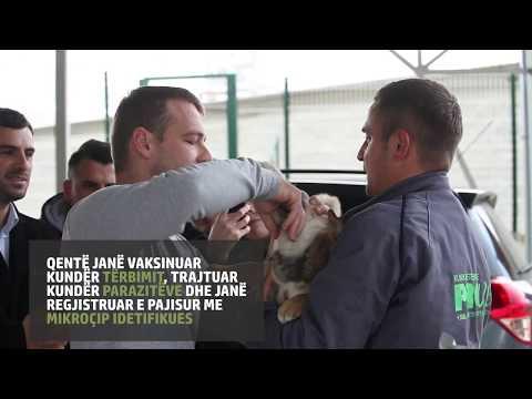 Pilot project for dog registration in Kosovo/ Mamusha
