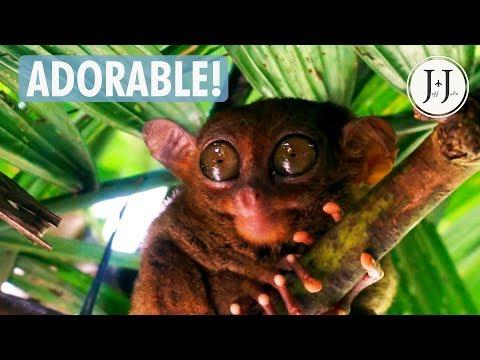 Foreigners explore TARSIER SANCTUARY & Man-made Forest | Bohol - Vlog #57