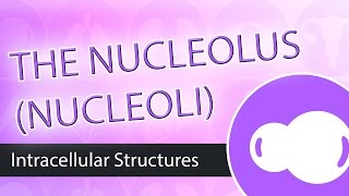 Intracellular Structures- The Nucleolus
