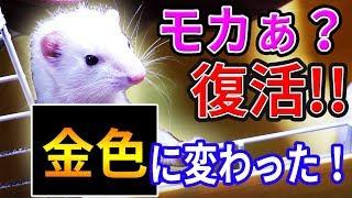 会員制ファンクラブ→https://fanicon.net/icons/urara/ Twitteフォロー...