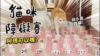 【黃阿瑪的後宮生活】貓咪障礙賽阿瑪可以嗎