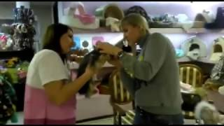 Стрижка в салоне Puffy-Groom(Стрижка собаки — это не такой легкий процесс, как может показаться на первый взгляд. У нас в салоне Puffy-Groom..., 2017-02-06T12:54:11.000Z)