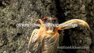 Video The Return of the Cicadas download MP3, 3GP, MP4, WEBM, AVI, FLV November 2017
