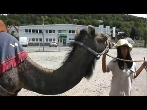 SAD NEWS /Traurige Nachricht: Kamelhof Rotfelden abgebrannt / burned down! Kamele tot-Camels dead :(