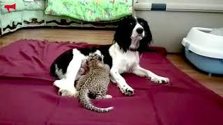 Новый леопард появился в зоопарке Садгород