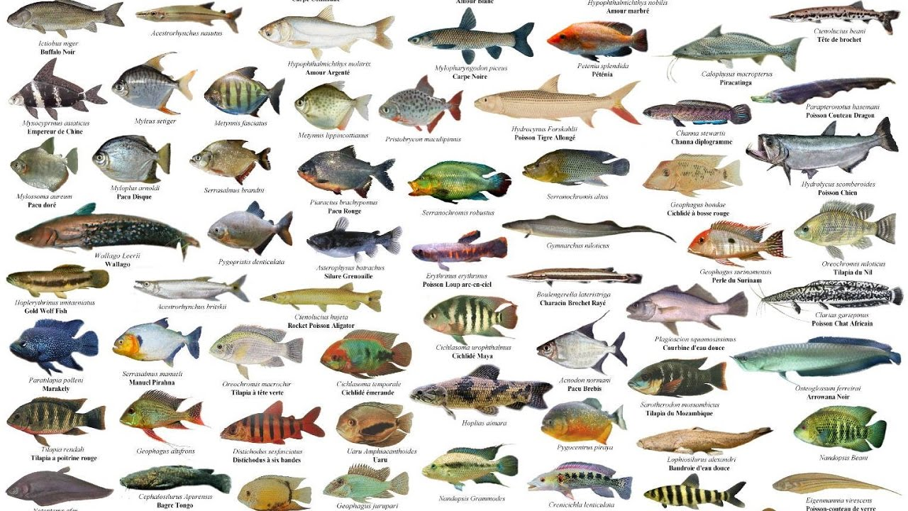 Macam Macam Nama Ikan Youtube