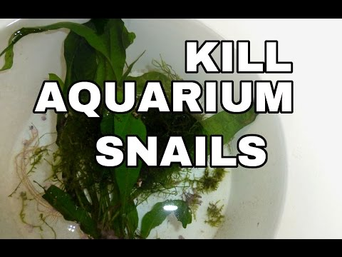 KILL Aquarium Snails On Plants And More