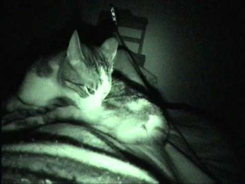 Sheena the Manx Cat filmed in INFRARED- Verry Scarrry!!!