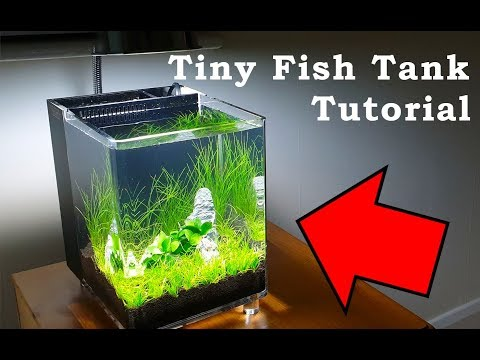 Tiny Fish Tank Tutorial | Low Budget Aquarium Build