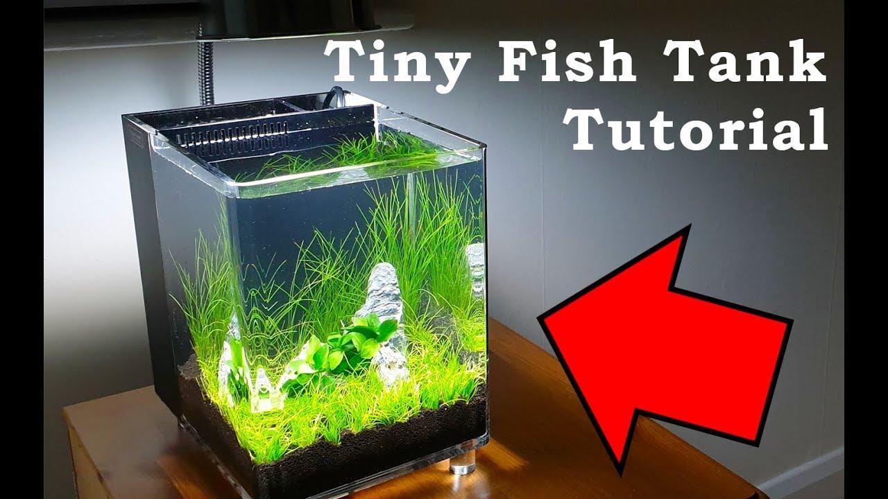 Tiny Fish Tank Tutorial Low Budget Aquarium Build Youtube