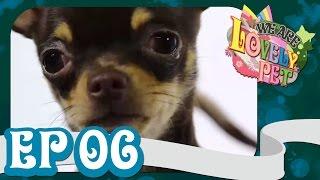 we-are-lovely-pet-quot-กิ๊ง-กิ๊ง-คุ๊-quot-ep-6-18-l-vrzo