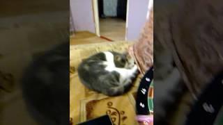не даю кошке спать и она мяукает