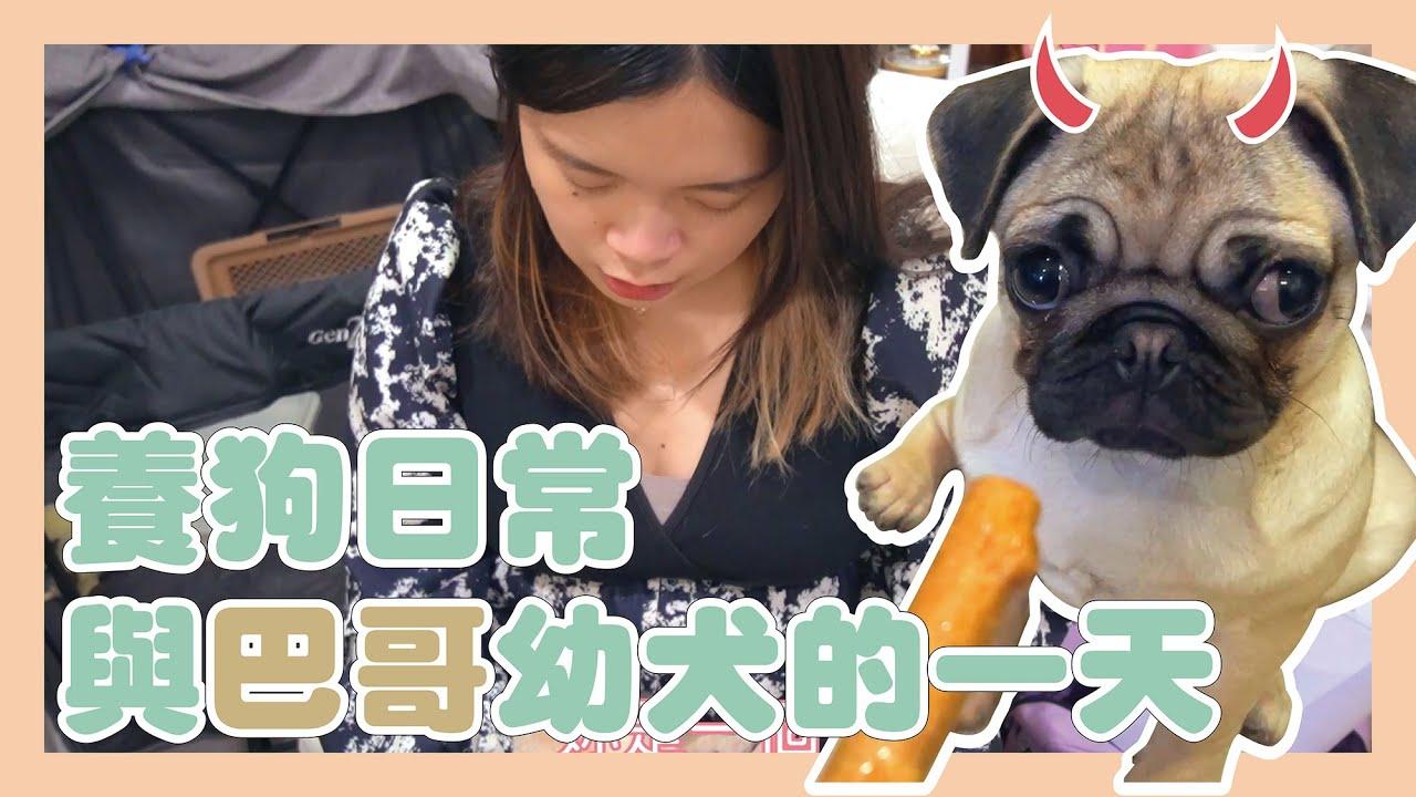 宅女與巴哥的一天。|挑戰一整天在家照顧巴哥幼犬【可妹Ato】|24 HOURS WITH PUG PUPPY!