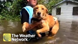 These heartwarming animal rescues from Florence floods will have you reaching for tissues