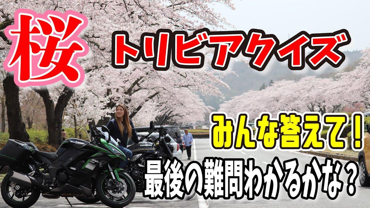 旅#82 日本の絶景!冨士霊園の千本桜~z900Rs / Ninja1000sx〜桜クイズわかるかなぁ~