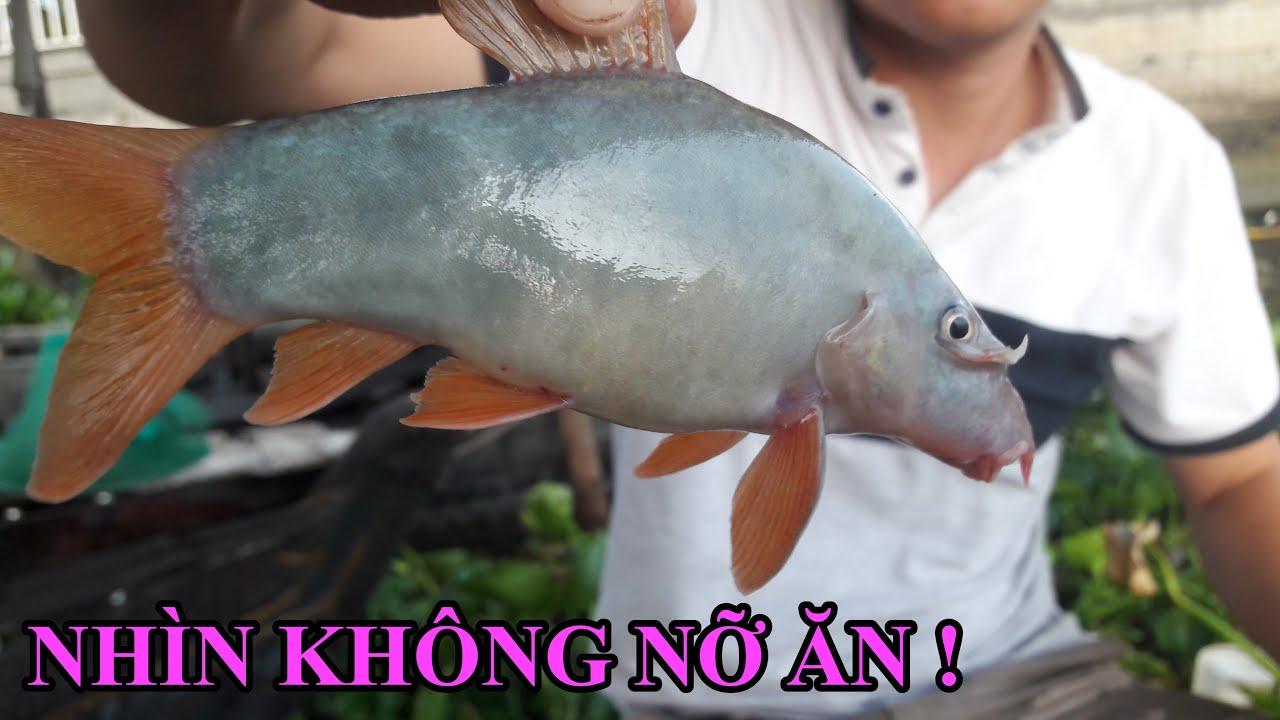 Hiếm có ! Cá heo sông Hậu cắn câu, Kéo cần lên mà sướng tay | Mien Tay Fishing #32
