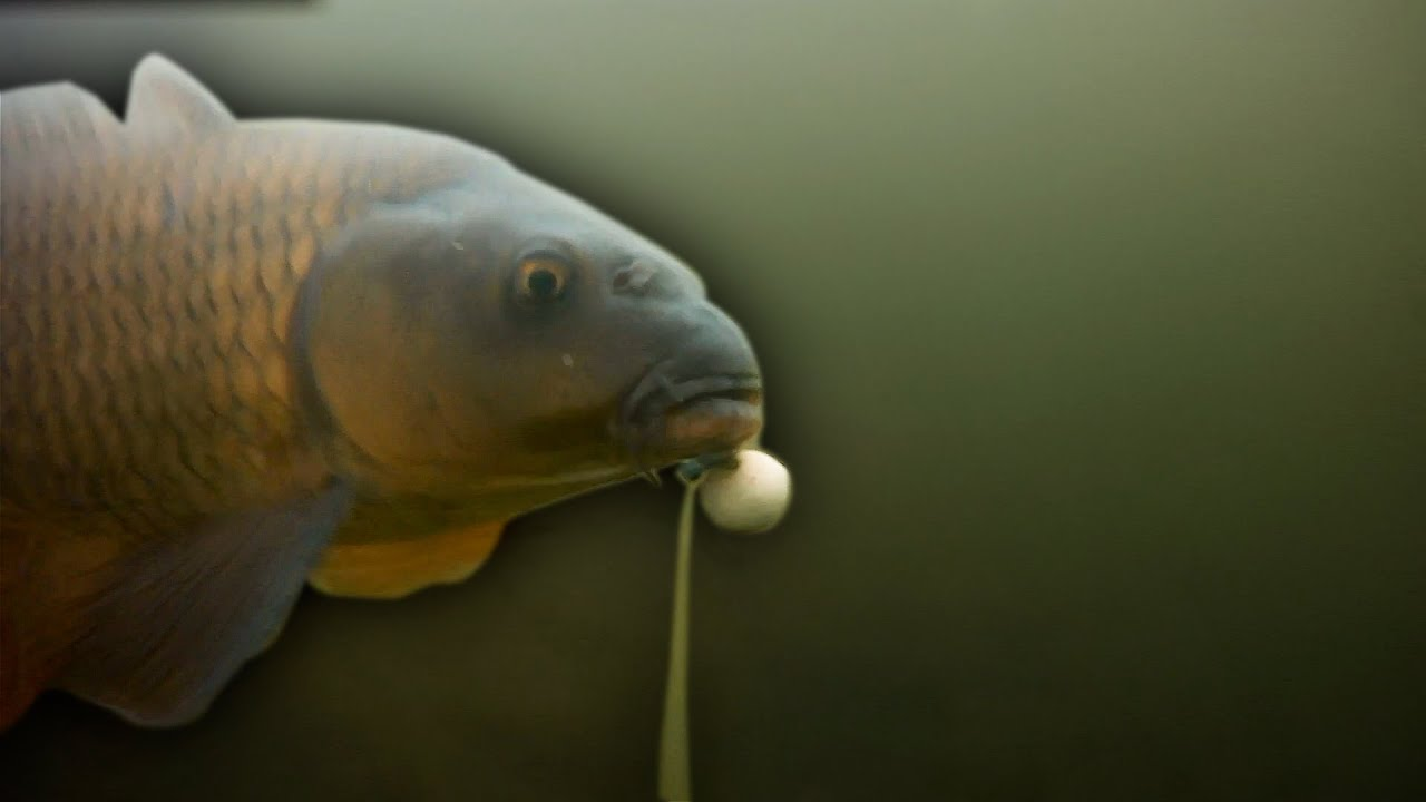 Carp Fishing, short winter session fishing beating the blank.