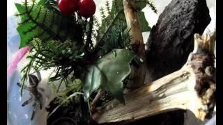 Avicularia bicegoi L6