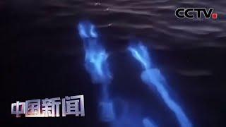 [中国新闻] 如梦似幻 海豚游过海面留下电蓝色光斑 | CCTV中文国际