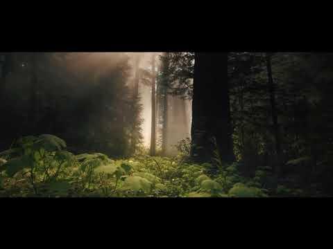 Alan Walker & DJ Snake (ft.Ellie Goulding) - Take Me With You (Official Music Video)