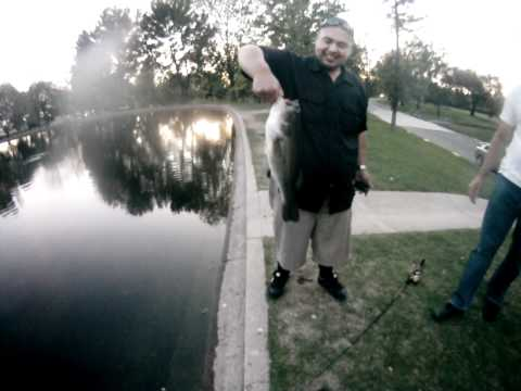 Guy Catches 5lb Bass At Simi Valley Duck Pond