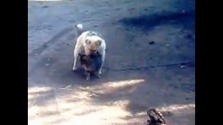 Собака чпокает кошку , строго 16+