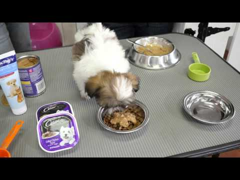 How To Feed A Teacup Puppy California Puppies