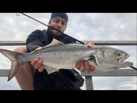 5/18/20 Bluefish Catch And Grill