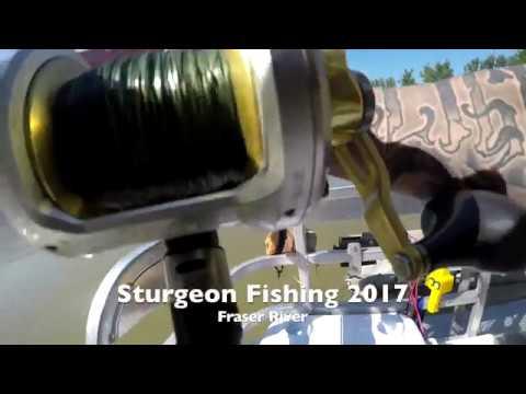 SturgeonSlayers.com 2017 - Fraser River / Harrison River