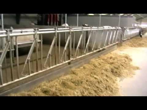 Cow factory Denmark