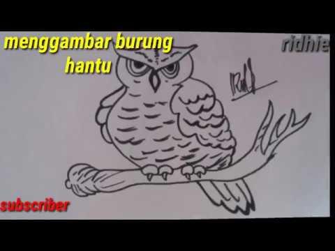 Menggambar Burung Hantu Mudah Untuk Anak Youtube
