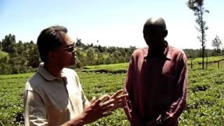 Tea & Cabbage, Kenya,
