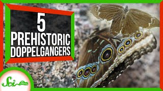 5 Strangely Familiar Ancient Animals