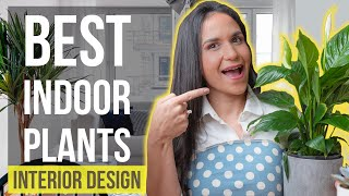 Best Indoor Plants | Interior Design Ideas Tips and Trends for Home Decor