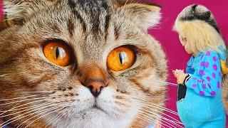 Super jumper Brother CAT ! Cute & funny cat video!